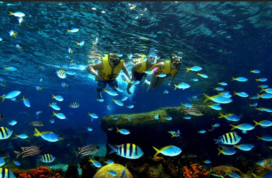 海の生き物と遊べる「アドベンチャー・コーブ・ウォーターパーク」